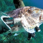 Coltello Pescasub: Quando 2 Sono Meglio di 1