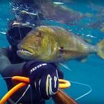Video Pescasub: il Grosso Dentice sulla Terrazza della Secca