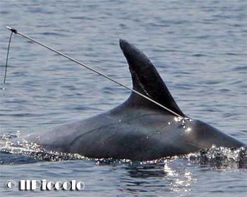 delfinocroazia
