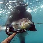 Video Pescasub: il Denticione sorpreso all'Agguato (10 kg)