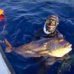 Video Pesca Sub: un Enorme Dentice Abissale (12,5 kg)
