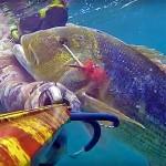Video Pescasub: l'Enorme Dentice a spasso nel Bassofondo