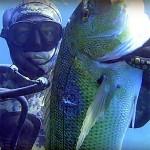 Video Pescasub: Il Grosso Dentice sorpreso in Caduta