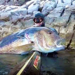 Video Pesca Sub: il Rapido Agguato all'Enorme Dentice (12 kg)