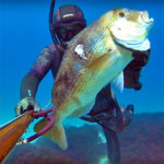 Video Pesca Sub: il Primo Dentice non si Scorda Mai (6,5 kg)