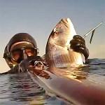 Video Pescasub: In Caduta sul Dentice con il Pigiama, sopra le Alghe Morte