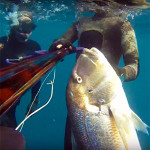 Video Pescasub: il Grosso Dentice all'Aspetto (10 kg)