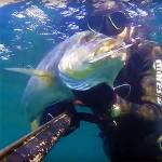 Video Pescasub: il Grosso Dentice in 2 metri d'Acqua (7,3 kg)