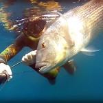 Video Pescasub: il Grosso Dentice e il Tiro di Muso (8,5 kg)