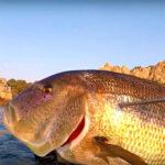 Video Pesca Sub: Grosso Dentice dalla Superficie (9 kg)