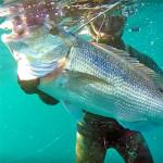 Video Pescasub: il Mega Dentice in Caduta e un Tiro Fortunatissimo (11 kg)