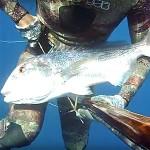 """Video Pescasub: il Grosso Dentice col Pigiama e la Murena """"da caccia"""""""