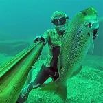 Video Pescasub: il Grosso Dentice sorpreso nel Canalone