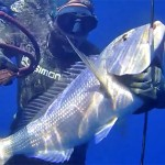 [Video] Pescasub all'Agguato: Dentici in Bassofondo – ISTANTI dal BLU ep.3