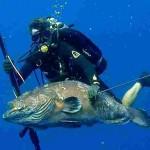 Curiosità: A quando risale il Divieto di Pescasub Notturna e con le Bombole?