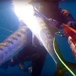 Video Pescasub: la Coppiola di Grossi Barracuda all'Aspetto