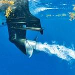 Pescasub investito in Corsica, l'autopsia rivela un'altra storia e la famiglia cerca testimoni