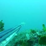 Pesca sub: il momento del tiro