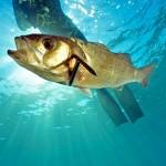 Pesca alla spigola nel Nord Atlantico: 3 pezzi al giorno per gli sportivi