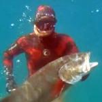 Video Pescasub: la Leccia Ingorda e il Cefalo Resuscitato