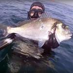 Video Pescasub: Grandi Incontri sul Grotto