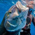 Video Pesca Sub: Una Ricciola con Due Fucili Contemporaneamente (53 kg)