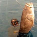 Video Pesca Sub: il Lastrone della Grande Cernia Bianca (16,8 kg)