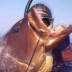 Video Pescasub: alla Caccia della Regina Bruna (19 kg)