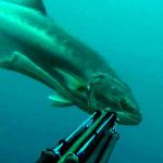 Video Pesca Sub: Una Leccia Molto Curiosa, Troppo…