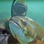 Video Pesca Sub: una Leccia all'Improvviso