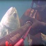 Video Pescasub: la Bella Leccia in Poca Acqua