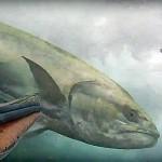 Video Pescasub: La Lecciona in caccia insegue le Spigole e quasi travolge il pescasub
