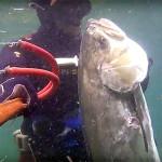 Video Pescasub: la Grande Leccia in 3 Metri d'Acqua