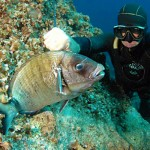 Licenza Pesca in Mare: dopo quella Nazionale ci saranno quelle Regionali?