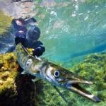 Regole Pesca Sub: il Limite di 500 mt dalle Spiagge, vale ANCHE in Inverno?