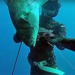 Video Pescasub: Lo Spigolone Gigante arriva all'Aspetto (9,4 kg)
