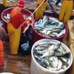 M5S Liguria: la Pesca Ricreativa Danneggia i Professionisti