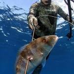 Leggi e normative della pesca in apnea sportiva e amatoriale