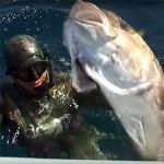 Video Pescasub: a Caccia di Super Ricciole con Dimitris Kollias