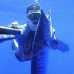 Pescasub tropicale: nel blu a caccia di wahoo (3a parte)