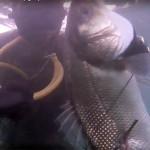 Video Pescasub Spigola: Nel Torbido a Bruciapelo 2