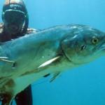 """L'immagine della pesca subacquea al tempo dei """"social"""""""