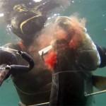 Video Pescasub: L'enorme Leccia arriva dall'alto