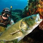 Pesca alla spigola: l'Europa ascolta gli sportivi e punisce i prof