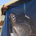 Mondiale di pesca in apnea di Lussino: in diretta