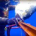 Video Pescasub: la Grossa Ricciola Immobile in Corrente (30 Kg)