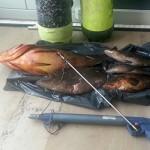 Pesca con le Bombole: 2 Cernie, 3 Dotti e 1000 euro di multa a Novaglie