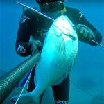 Video Pesca Sub: una Grossa Orata sotto il Ciglio (3 kg)