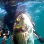 Video Pescasub: la Grossa Orata, nella Tana della Cernia (5,2 kg)
