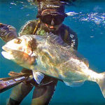 Video Pesca Sub: la Grossa Orata all'Aspetto in Bassofondo (4,3 kg)